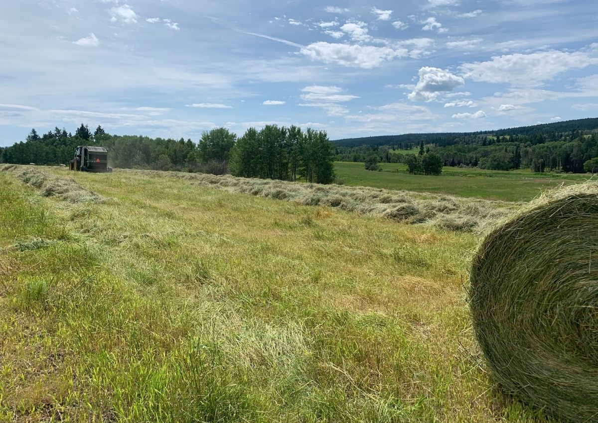 Baling hay during haying season on the ranch