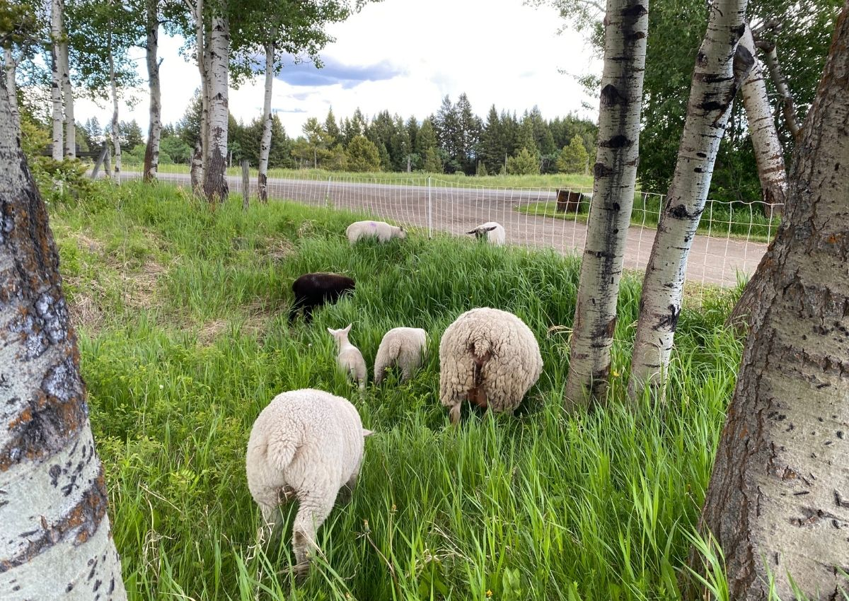 Gallagher Sheep Turbo Electronet Fence