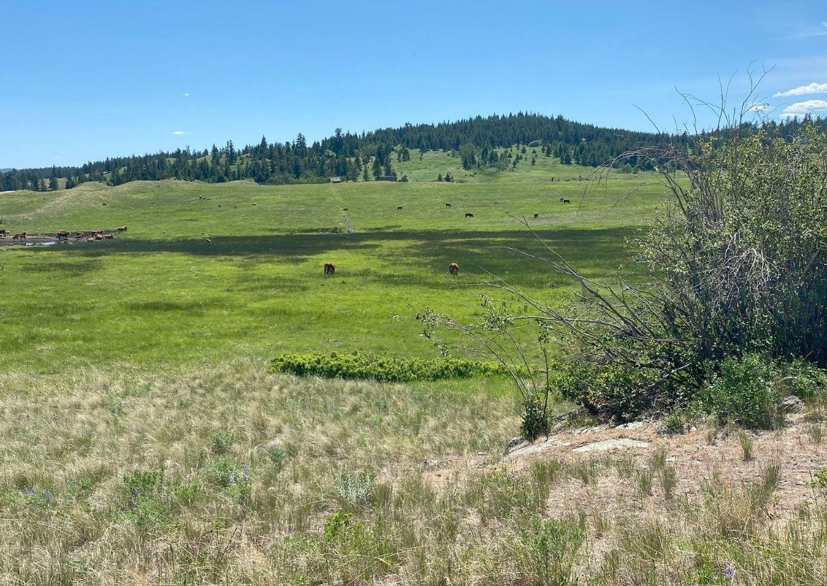 Grassland in the Thompson Nicola of British Columbia