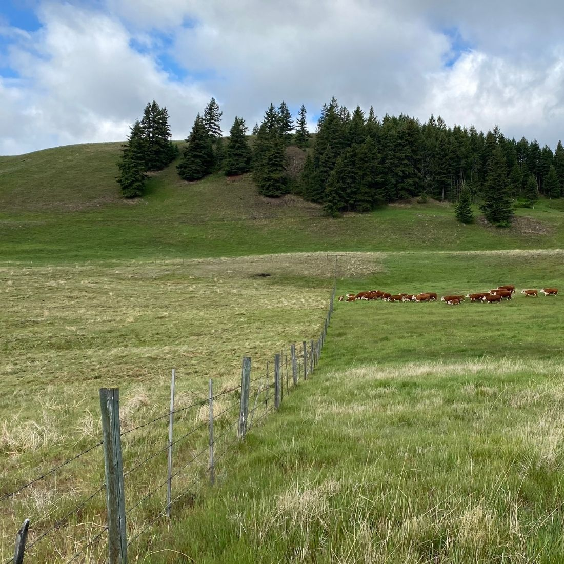 Difference on pastures between ungrazed vs grazed