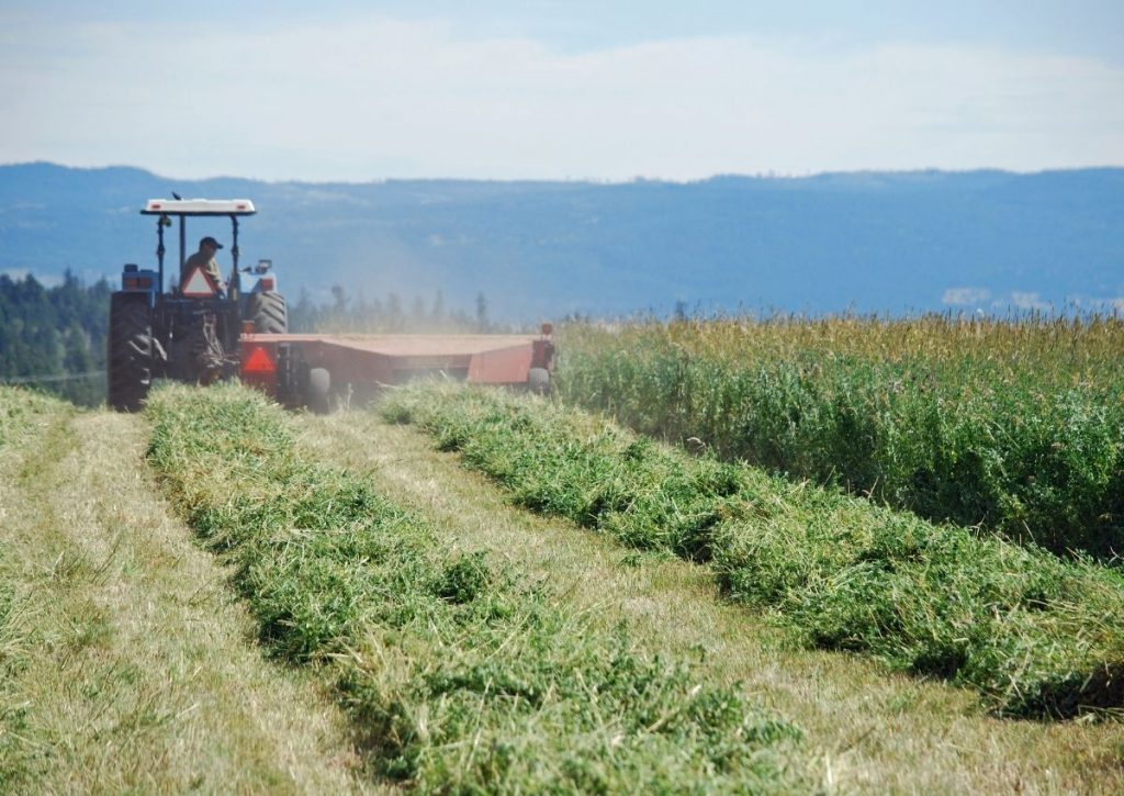 Swathing Hay with Tractor