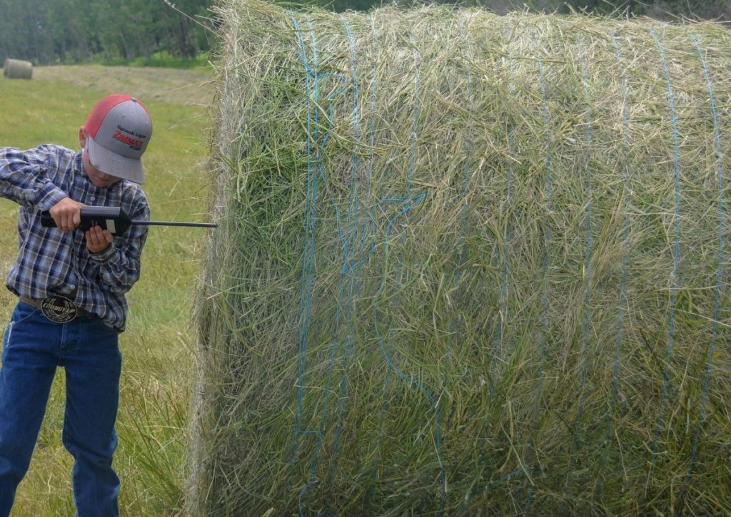Testing Moisture Level in Bale of Hay