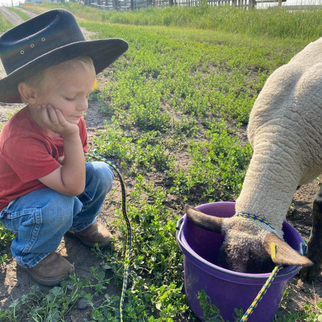 Toddler Feeding Lamb Grain