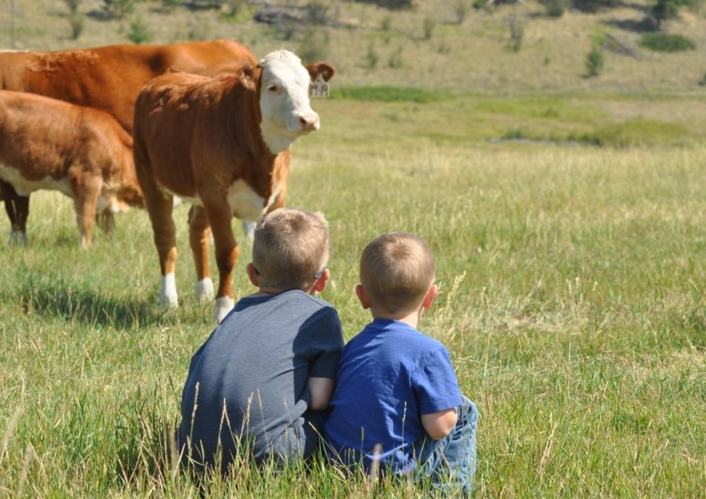 Ranch Boys Watching Cows